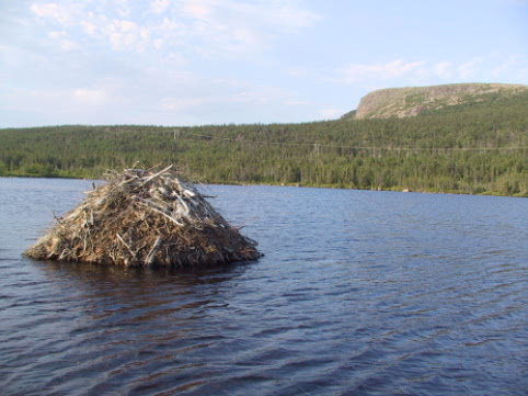 beaver dam in Butterpot pond