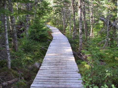 parts of the trail are boardwalked