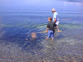 Catch Capelin with a net and bucket