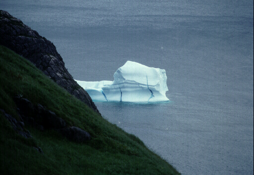 Fun Iceberg Tours